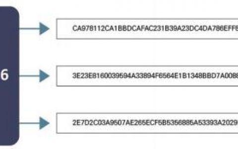 Cube Chain公开数据库的各种在线服务