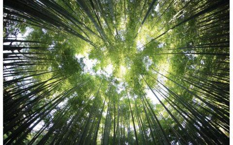 Cosmos 生态系统中的主要组织